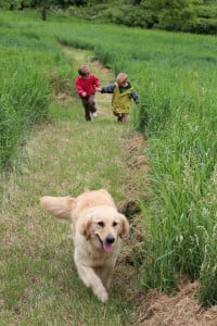 We raise our dogs as part of our family and firmly believe in the importance of lots of fresh air, exercise, and sunshine as part a healthy lifestyle for each canine member.