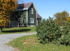 Windy Knoll Farm, our five acre country haven in the Champlain Valley of Vermont. Windy Knoll Farm is home to Windy Knoll Goldens