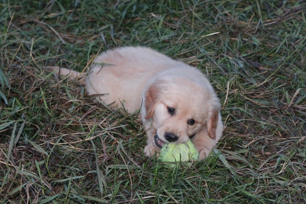 Puppy&Ball
