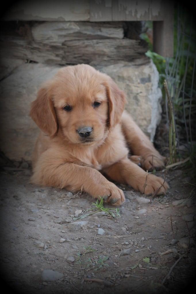 PuppyCuteness