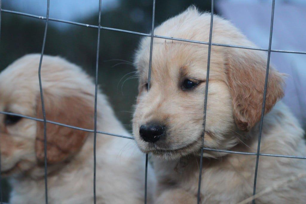 PuppyLove2