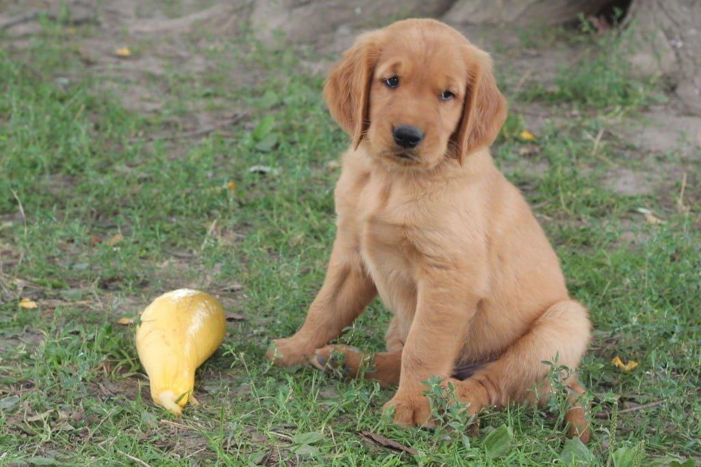 Puppy&Squash5