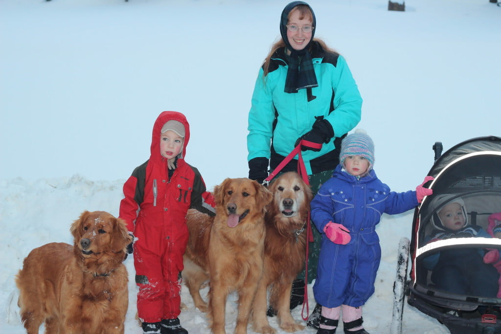 Windy Knoll Goldens and Moores enjoy the Vermont Winter