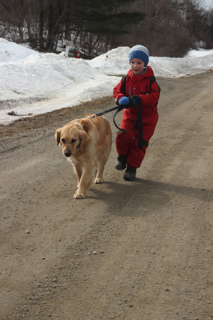 Jenny began to take liberties once she realized that Jonathan was on the other end of the leash.