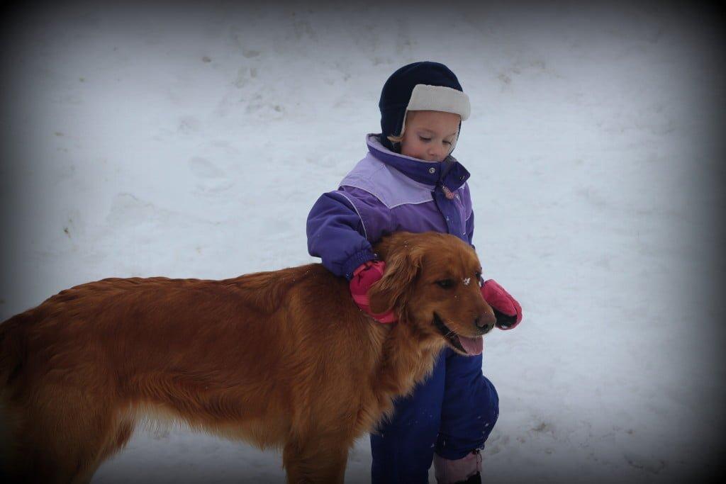 Golden Retrievers and Children love winter outside