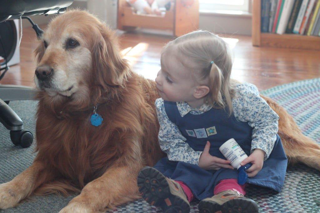 Our AKC Golden Retriever Shep loves children