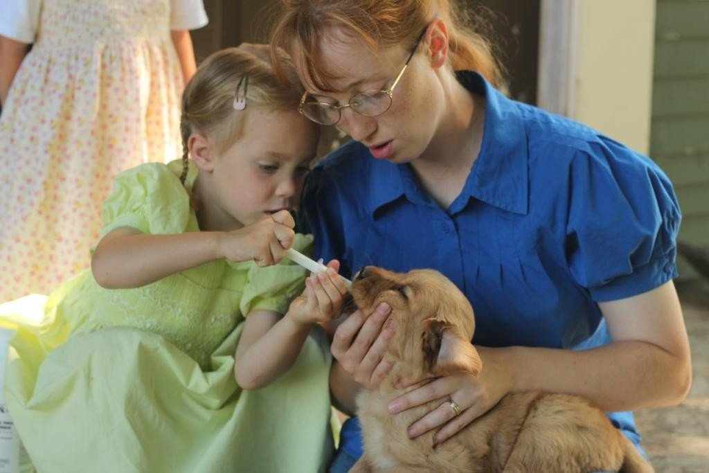 Administering Wormer to a Golden Retriever Puppy
