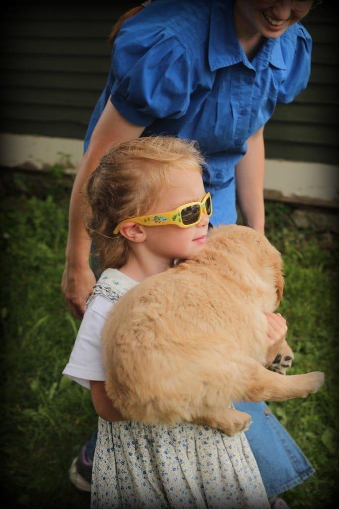 Children and Golden Retriever puppies working together