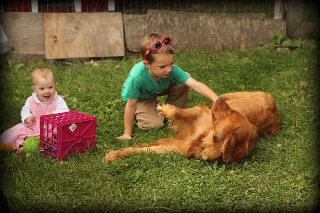 Children and Golden Retrievers get along great