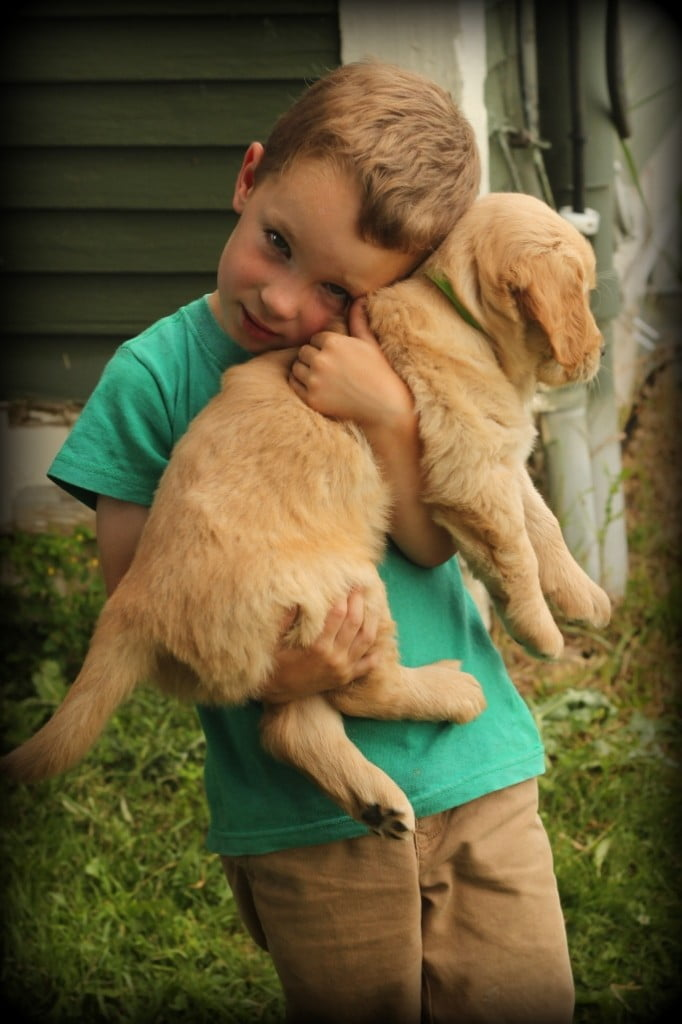Jonathan helps as our AKC Golden Retriever puppies are vet checked at six weeks of age