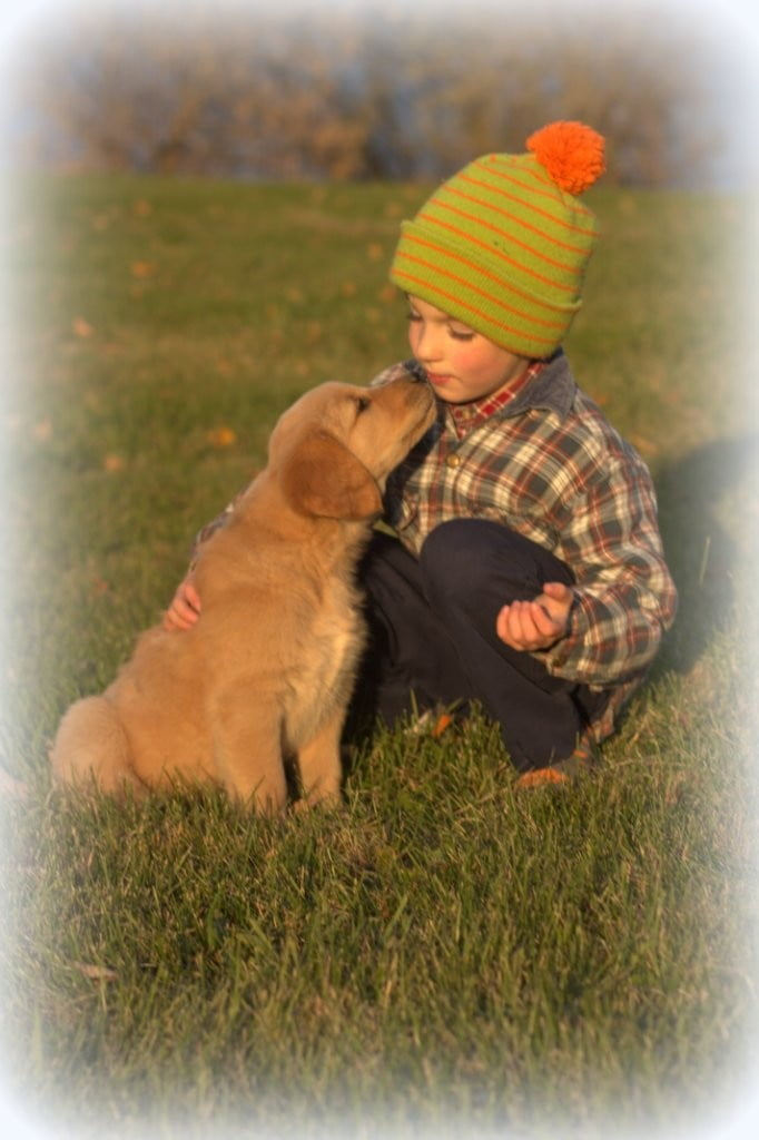 As family breeders of AKC Goldens, it's a delight to see our children enjoy our dogs