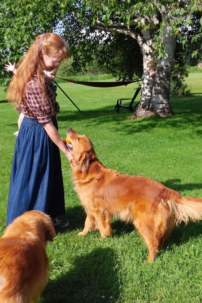 Greeting Speckles from Pot of Gold Kennel, breeder of AKC Golden Retrievers