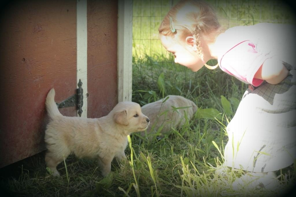 Esther and one of our small AKC Golden Retriever puppies share a moment together