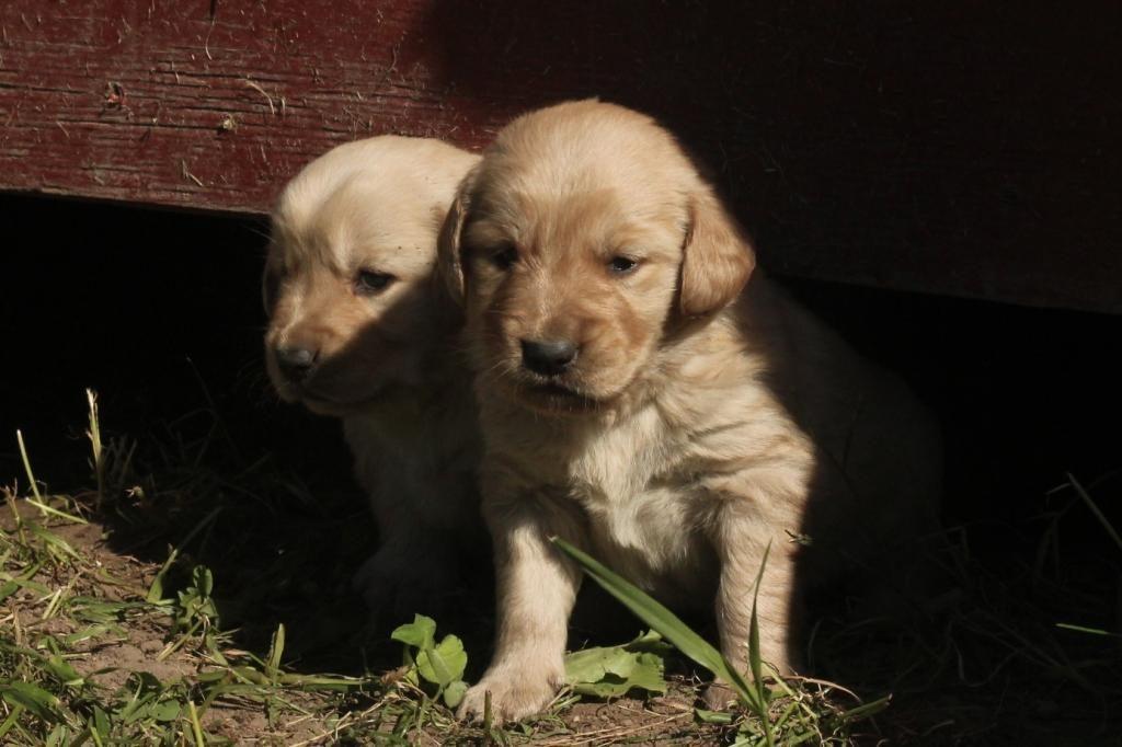 Puppy Peekaboo