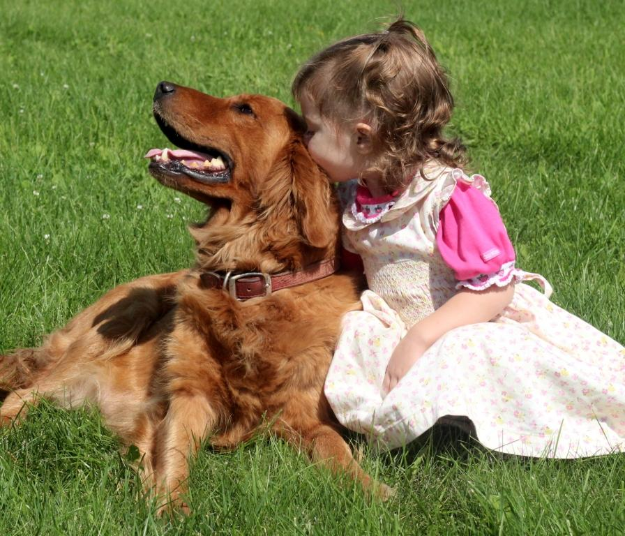 Akc Golden Retrievers Are Great With Children Windy Knoll Golden