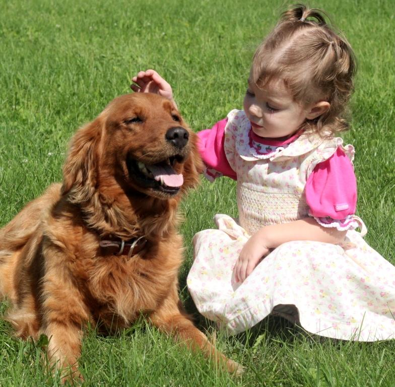 Goldens Are Great For Kids Windy Knoll Golden Retrievers